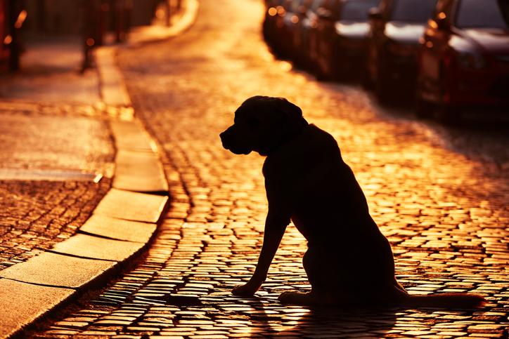 Syns din hund i mörkret?