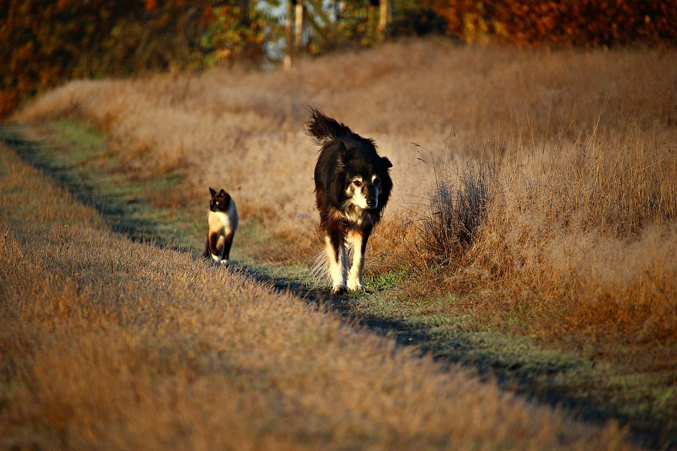 Hundar och katter – naturliga fiender?